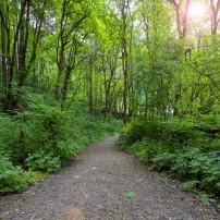 Northwest Park Trail