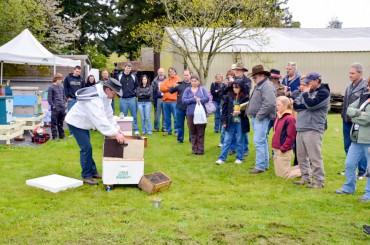 David Mackovjak's bee installation