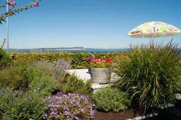 The Seaside Garden of Dody Solaas