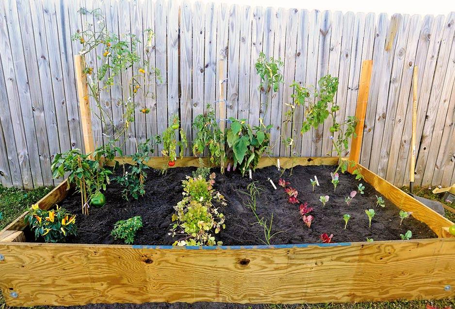 Organic Vegetable Gardening Class Gardens You Can Eat