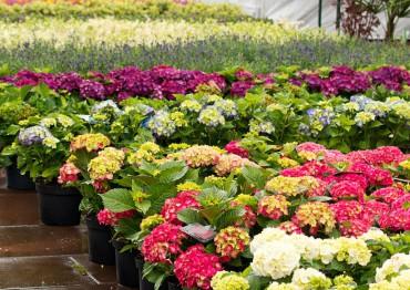 Plant Sales 2015