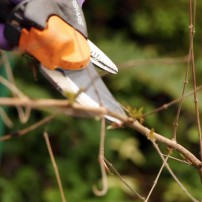 Tips for Successful Plant Pruning