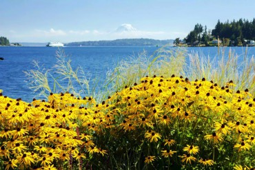 Bainbridge in Bloom 2015