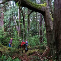 Port Gamble's Kitsap Forest and Bay Project