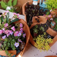 Cracked Pot Miniature Container Gardens