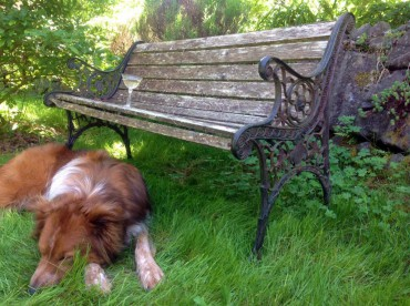 Dog And Park Bench
