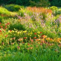Sundquist Nursery — Perennial beds in summer glory