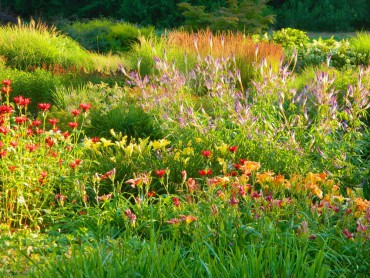Sundquist Nursery — Perennial beds in summer glory