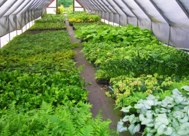 Sundquist Nursery A production coldframe
