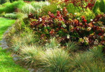 "Sundquist Nursery ""Peewee"" oakleaf hydrangeas and grasses light up the fall season in the meadow border."