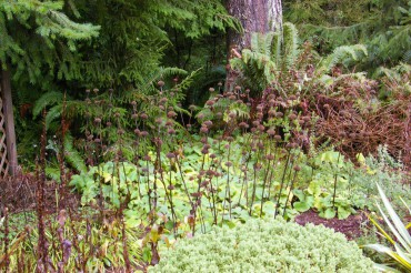 The dried stalks of Phlomis flowers remain in Colleen Miko's garden until spring.