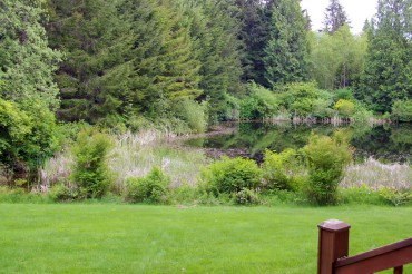 The pond, May 2015 — frog chorus is uproarious and the ducks have been visiting since January: buffleheads, merganzers, mallards, wood ducks and ring-necked ducks.