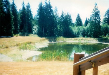 The first summer with the pond — no ducks visited, no frog chorus.