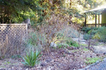 Bless this mess! The garden in winter — leaves cover the soil and dried stalks remain intact.