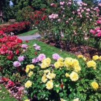Point Defiance Rose Garden in Tacoma