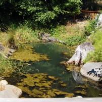 Poulsbo Fish Park