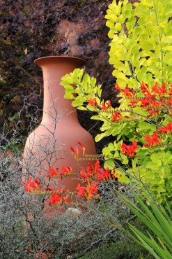 The large vase next to the golden smoke bush (Cotinus 'Golden Spirit') beckons you to come closer and is a favored spot for hummingbirds when the Crocosmia 'Lucifer' is in bloom.