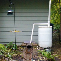 The rain barrel system of rain garden mentor volunteer Judy Guttormsen. Rainwater is used in season for watering her container plants, and overflow reaches her rain garden though a decorative channel.
