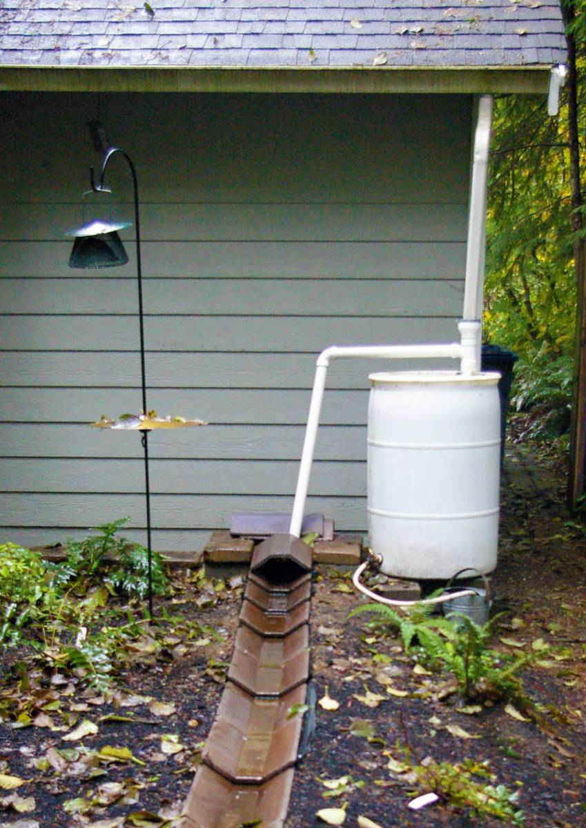 The Rain Barrel System Of Garden Mentor Volunteer Judy Guttormsen Rainwater Is Used In Season For Watering Her Container Plants And Overflow Reaches