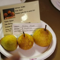 Fall Fruit Show 2015