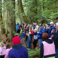 Throngs of people delight in seeing the salmon return at the Mountaineers Rhododendron Preserve last fall. Salmon docents and guides will be on hand to lead tours and answer questions again this year. (Photo courtesy Jeff Adams)