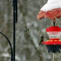 Snow Hummingbird Feeder
