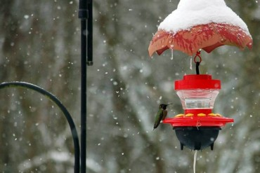 Snow Hummingbird Feeder