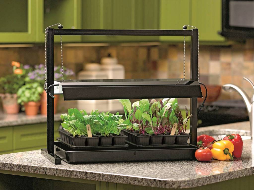 Wshg Net Blog Homegrown Flavor From An Indoor Garden Featured Gardeners Corner January 13