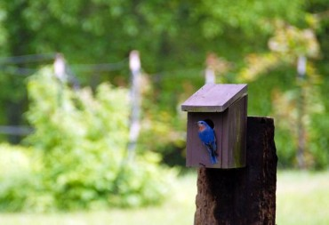 Time to Think About Birdhouses