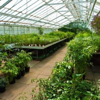Garden Nursery Plants