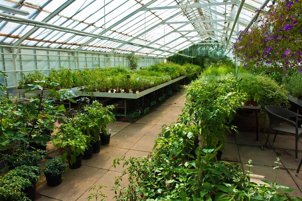 Garden Nursery Plants Flowering