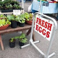 West Sound Farmers Markets