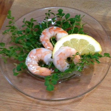 Shotweed (cardamine hirsuta) drizzled with lemon vinaigrette dressing in a shrimp salad.