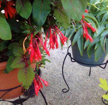 Annual - Gardenmeister