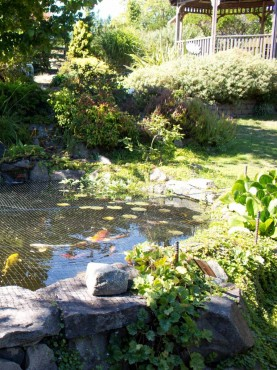 Pond or Water Feature