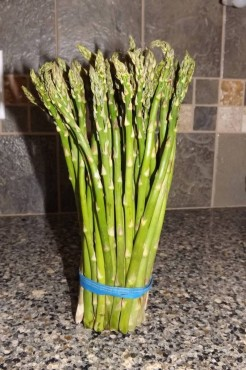 Bundle of small asparagus stalks fresh from the market