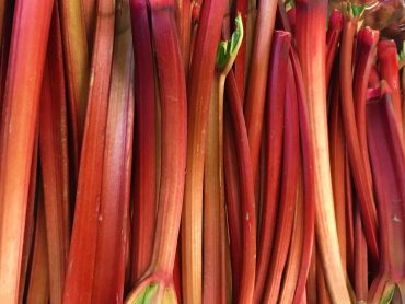 Stalks of ruby red rhubarb at the grocery store
