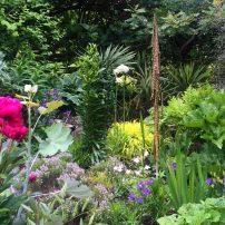 The Dr. Seuss-inspired garden of Ron Gillespie