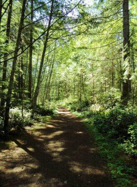 Big Pond Trail at McCormick Woods