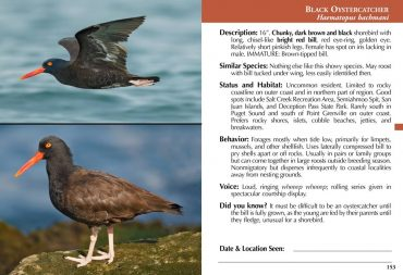 Birds of Puget Sound Book Excerpt