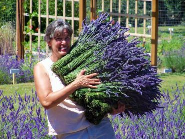 Tracy Ketts with an armload of fragrant lavender (Photo courtesy Tracy Ketts)
