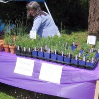 Outside plant sales table (Photo courtesy Tracy Ketts)