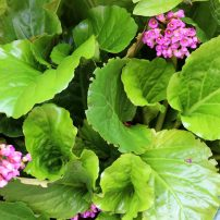 Les & Betty Krueger Family Healing Garden