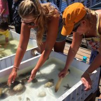 Geoduck Festival Touch Pools