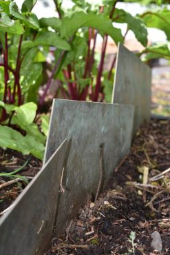 Copper barrier helps exclude slugs from a tasty crop.