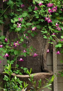 A Clematis 'Odoriba' climbs around a wall-mounted fountain.
