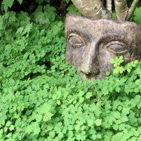 A Garden for Refuge