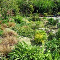 Cheryl Bosley's rain garden