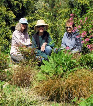 Cheryl Bosley, Judy Cole-Martin and Ellen Gunderson overlooking Bosley's rain garden.