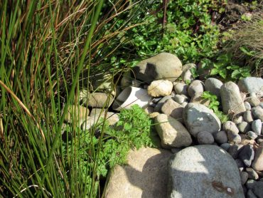 The inflow into Cheryl Bosley's rain garden is lined with river rock.